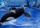Kate del Castillo: Dile adiós a SeaWorld