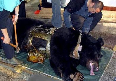 china-osos-bilis-392x272