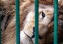 Circos sí, pero sin animales
