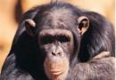 El horrible tráfico de los animales exóticos