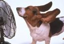 ¡Ojo con el calor y las mascotas!
