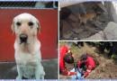Adiós, Dayko: con honores despiden a perro rescatista en Ecuador