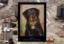 Orión: el perro héroe que salvó 37 vidas durante la tragedia de Vargas