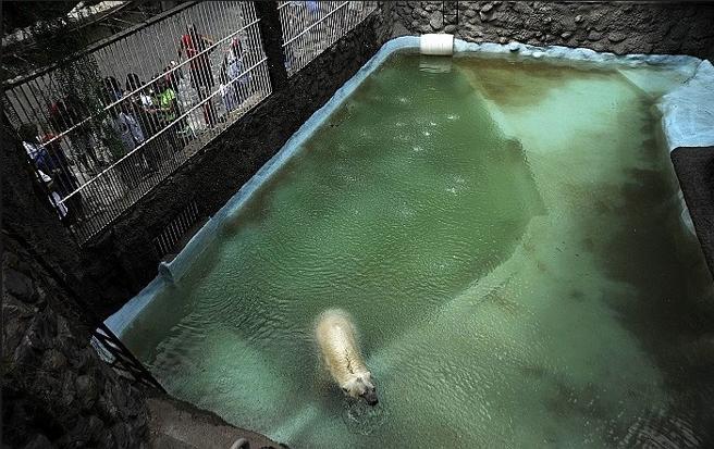 Zona de piscina en el recinto del oso Arturo, en el Zoo de Mendoza, Argentina (PZM)