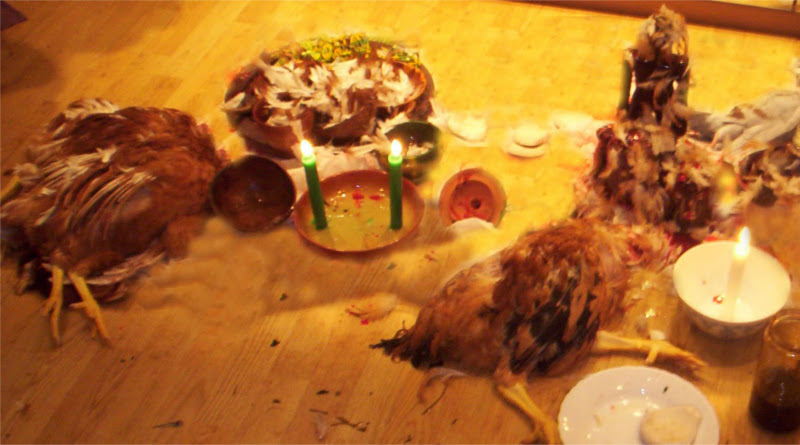 aves-decapitadas800x445