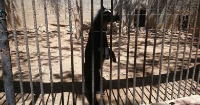 Confirman muertes de tres animales en Zoológico de Paraguaná