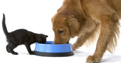 Alimentación alternativa para perros y gatos