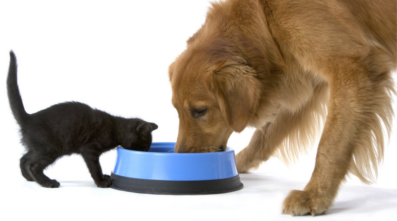 perro-y-gato_alimento800x445