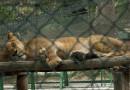 MP logró medida en defensa de animales del Zoológico de Caricuao