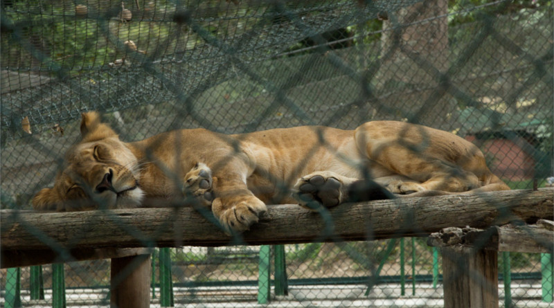zoologico_caricuao_800x445