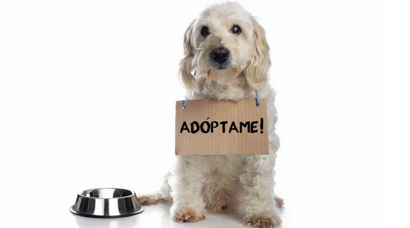 Perros-en-adopcion800x445