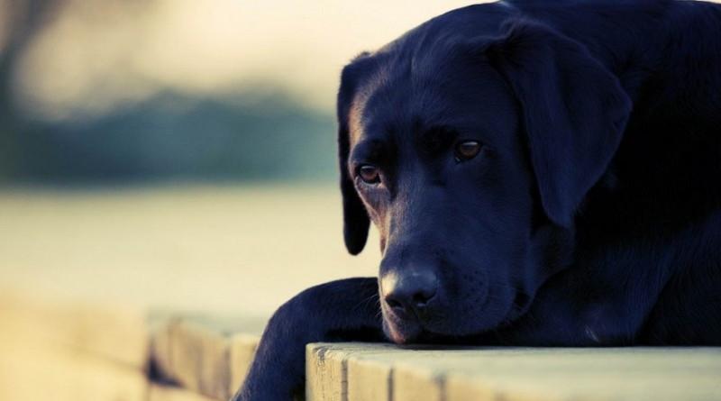 perro-callejero-800x445