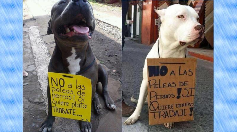 Mexicó prohíbe peleas de perros