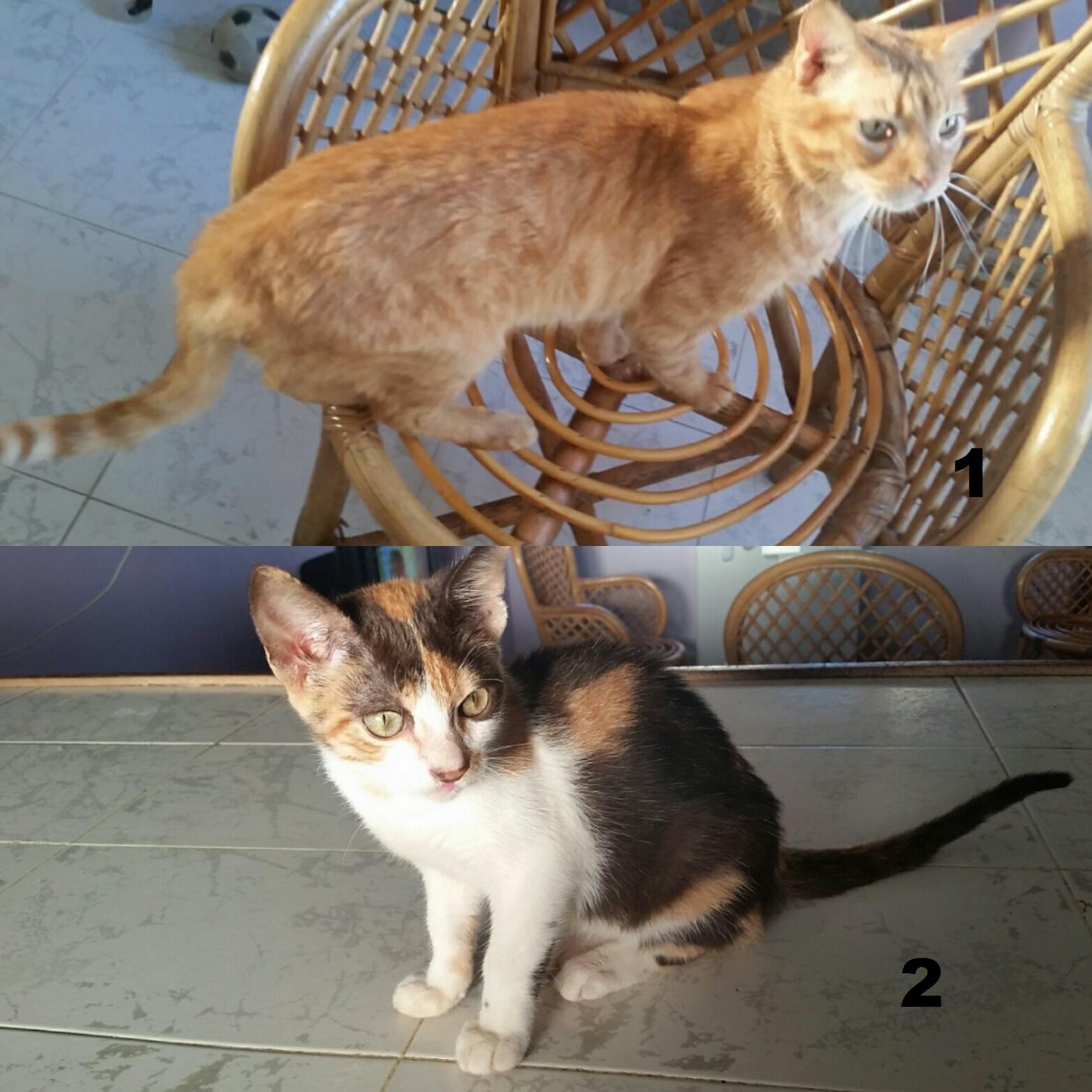 Higuerote gatos