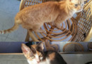 #Adopta Lindos gatos buscan hogar