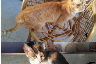 Higuerote gatos 309x205