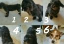 #Adopta Lindos perros buscan hogar