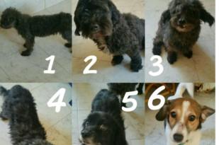 Higuerote-perros 309x205