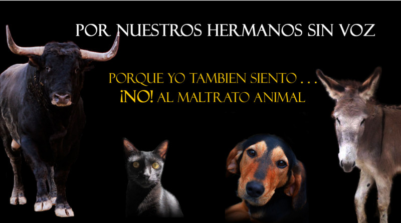 Sufrimiento-Animal 800x445