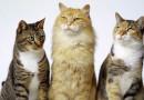 Esterilización solidaria de felinos en Aproa