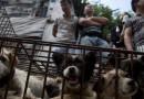 China pone fin al polémico Festival de Carne de Perro de Yulin