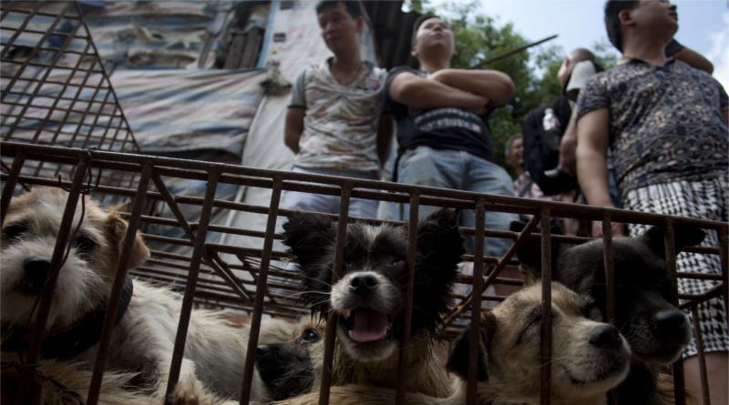 perros-china-festival800x445