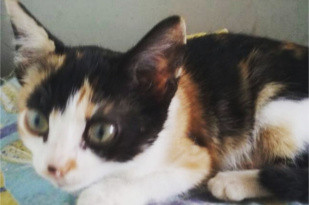 #BuscoHogar linda gatita Xuly