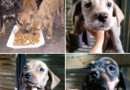 Buscan hogar lindas cachorritas