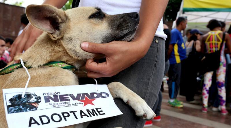 Misión Nevado se comunicó con familia del perrito Cross para instarlos a formalizar la denuncia