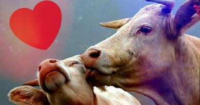 ¡Los animales y los toros ganaron otra! ¡Felicitaciones!