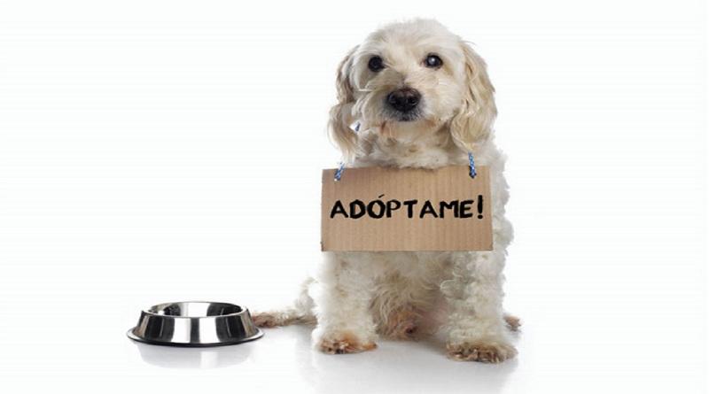 ¡Adopción responsable!