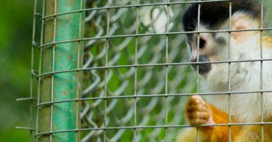 ¡Circos y zoológicos! animales condenados al sufrimiento