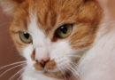 Código penal y maltrato animal