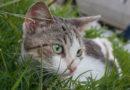 Febrero el mes de los gatos