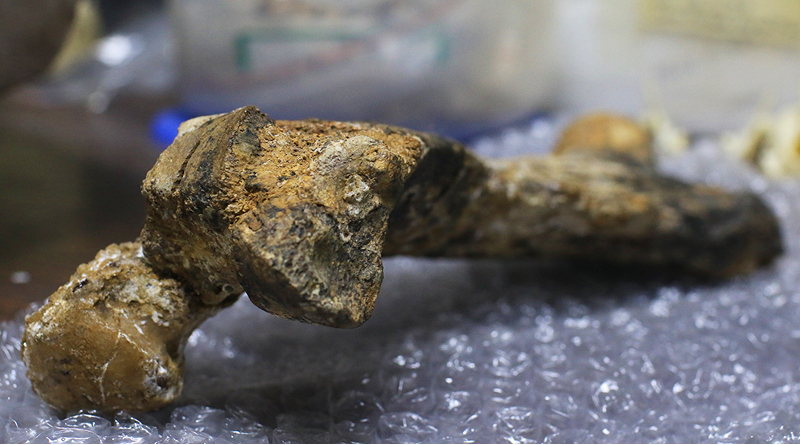 Fósiles de perezosos extintos fueron hallados en Venezuela