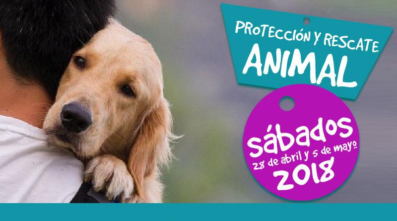 Se realizará Primer Curso Certificado de Protección y Rescate Animal