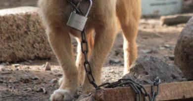 Cómo denunciar el maltrato animal en Venezuela