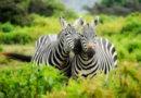 Estudios comprueban que los animales recuerdan hechos pasados