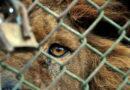 Inocentes en prisión: Zoológicos están en decadencia
