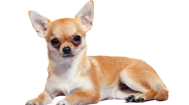 Redes sociales viralizan a un perro que odia que lo besen