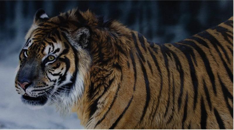 Ocho especies que podrían desaparecer en 2019