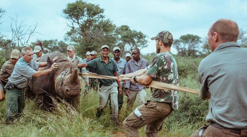 UNESCO: Más de 1 millón de especies amenazadas de extinción