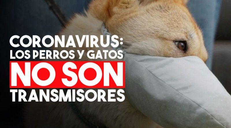 Coronavirus: perros y gatos no pueden transmitir la enfermedad